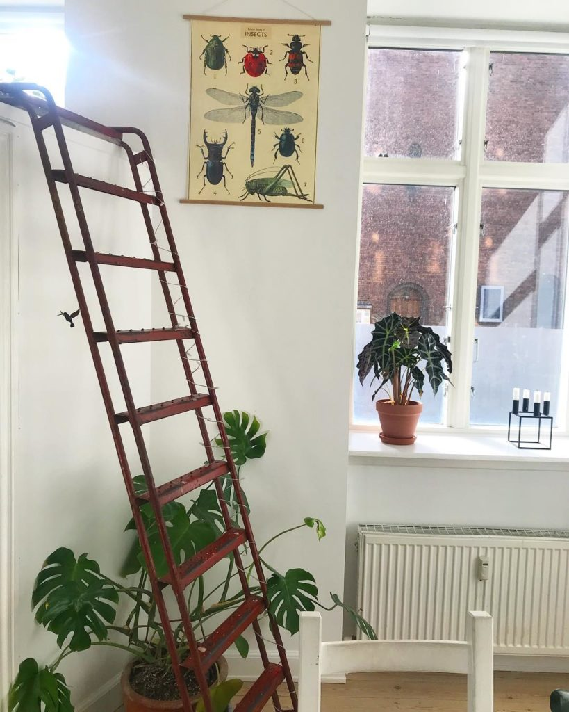 Insekter planter og direkte stairway to heaven micasa